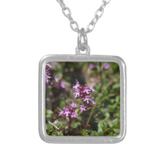 Mother of thyme flowers (Thymus praecox) Silver Plated Necklace