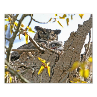 Mother Owl and Baby in Nest Photo Print