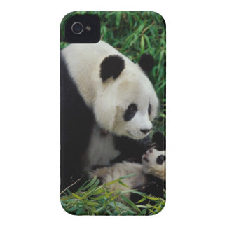 Mother panda and baby in the bamboo bush, Wolong iPhone 4 Case-Mate Case