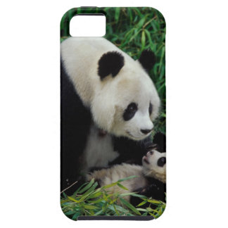 Mother panda and baby in the bamboo bush, Wolong iPhone 5 Cover