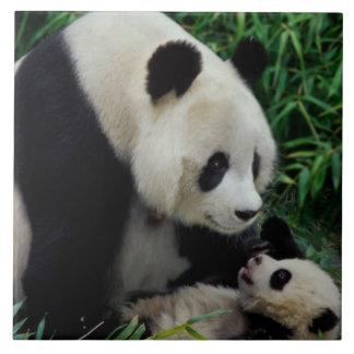 Mother panda and baby in the bamboo bush, Wolong Tile