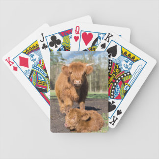 Mother scottish highlander cow near newborn calf bicycle playing cards