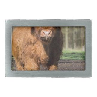 Mother scottish highlander cow near newborn calf rectangular belt buckle