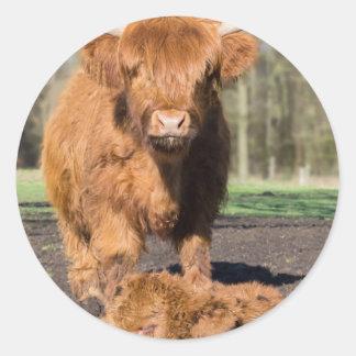 Mother scottish highlander cow near newborn calf round sticker