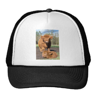 Mother scottish highlander cow near newborn calf trucker hat