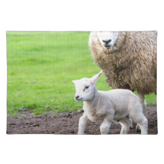 Mother sheep and newborn lamb in meadow placemat