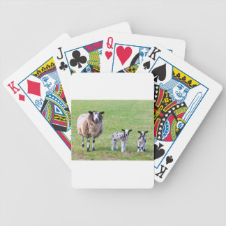 Mother sheep with two newborn lambs in spring bicycle playing cards