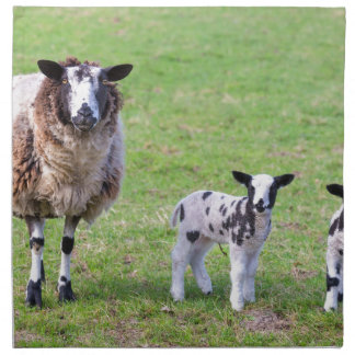 Mother sheep with two newborn lambs in spring cloth napkins