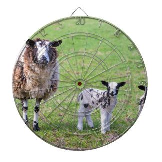 Mother sheep with two newborn lambs in spring dartboard