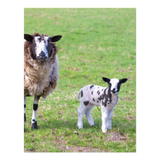 Mother sheep with two newborn lambs in spring letterhead