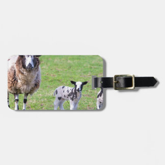 Mother sheep with two newborn lambs in spring luggage tag