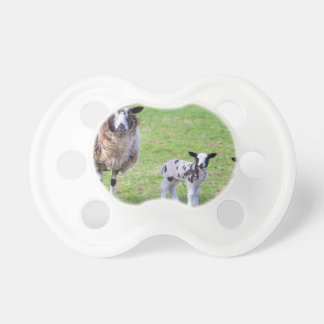 Mother sheep with two newborn lambs in spring pacifier