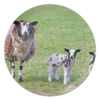 Mother sheep with two newborn lambs in spring party plate