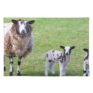 Mother sheep with two newborn lambs in spring placemats