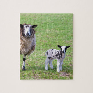 Mother sheep with two newborn lambs in spring puzzle