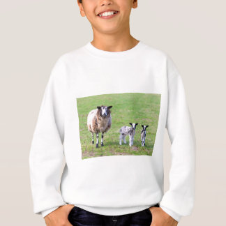 Mother sheep with two newborn lambs in spring sweatshirt