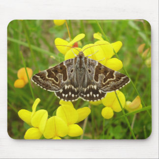 Mother Shipton Moth Mouse Mat