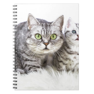 Mother silver tabby cat with young kitten.jpg spiral note book