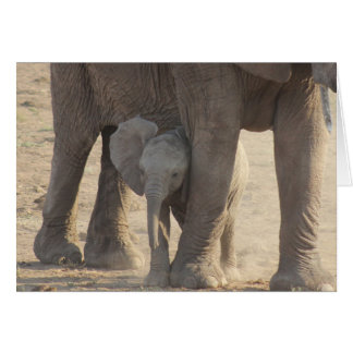 Mother's Day (Baby Elephant) Card