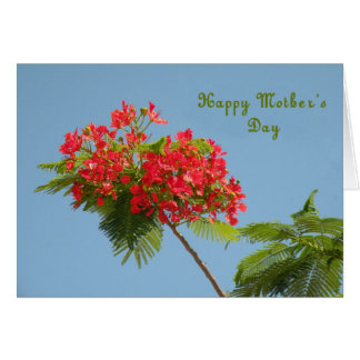 Mother's Day Card with a Royal Poinciana Flower
