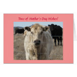 Mother's Day - Cute White Cow - Ranch or Farm Greeting Card