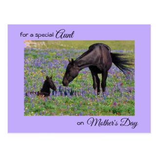 Mother's Day for Aunt Mare & Foal Photo Postcard