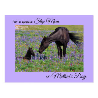 Mother's Day for Step Mom Mare & Foal Photo Postcard
