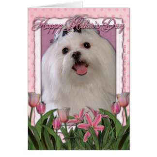 Mothers Day - Pink Tulips - Maltese Greeting Card