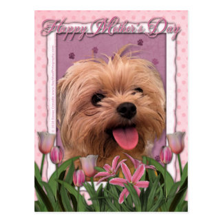 Mothers Day - Pink Tulips - Morkie - Lacey Postcard