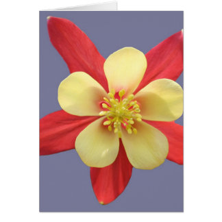 Mother's Day Red & Yellow Columbine Card