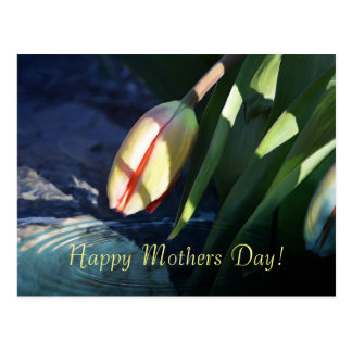 """""""Mothers Day"""" Spring Tulip Postcard"""