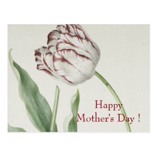 Mother's Day - Vintage white & red tulip Postcard