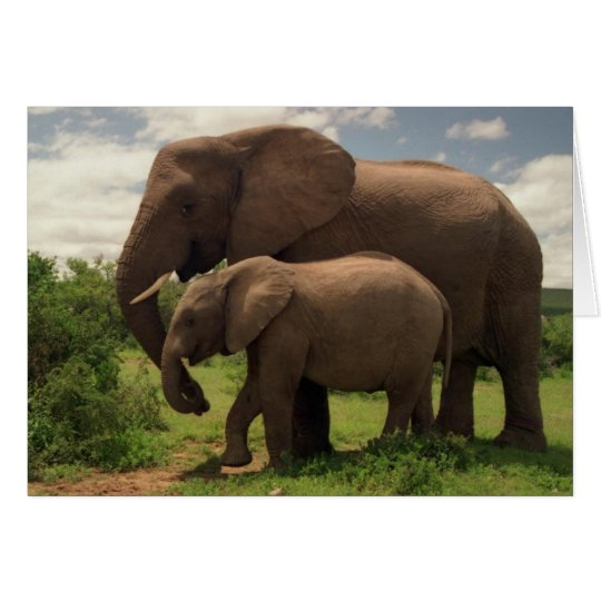 Mother's Love - Elephants - Greeting Card