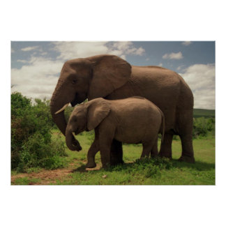 Mother's Love - Elephants Poster