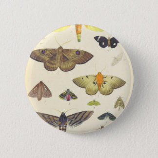 Moths and Butterflies of New Zealand 2 Inch Round Button