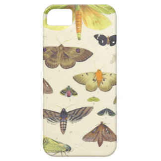 Moths and Butterflies of New Zealand Case For The iPhone 5