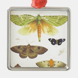Moths and Butterflies of New Zealand Metal Ornament
