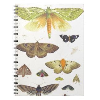 Moths and Butterflies of New Zealand Notebooks