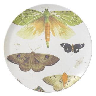 Moths and Butterflies of New Zealand Plate