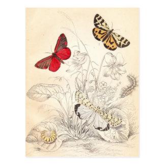 Moths and Butterflies Postcard