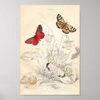 Moths and Butterflies Poster