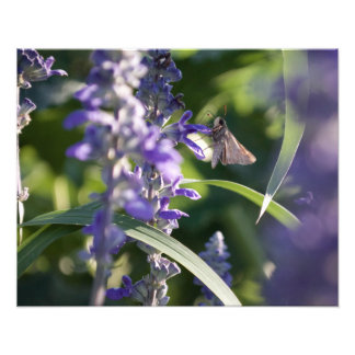 Moth's Day Photographic Print