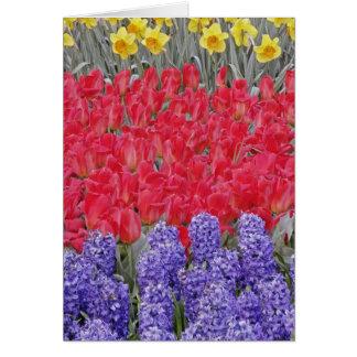 Motif de jacinthe, de tulipes, et de jonquilles, carte de vœux