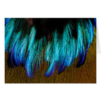 Motmot Feather Abstract Card