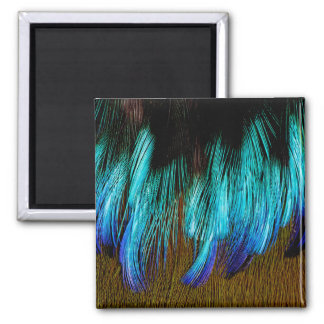 Motmot Feather Abstract Magnet
