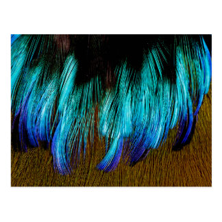 Motmot Feather Abstract Postcard