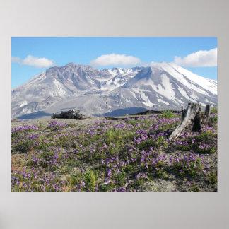 Mount St Helens Spring Poster