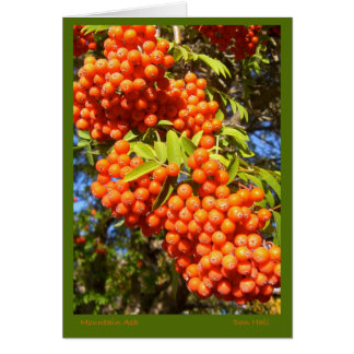 Mountain Ash Berries Card