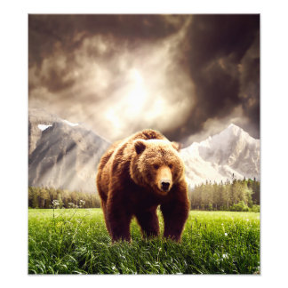 Mountain Bear Photo Print