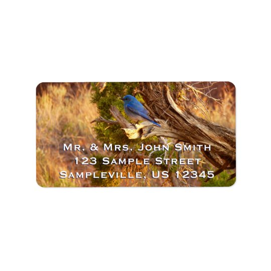 Mountain Bluebird at Arches National Park